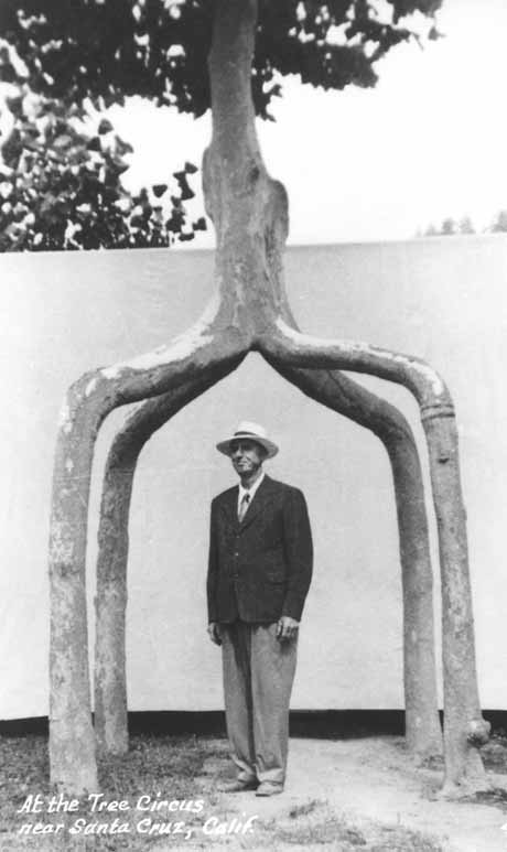 Axel Erlandson underneath a Circus Tree