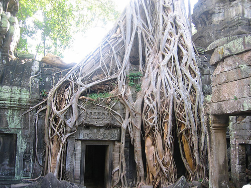 Banyan tree at Ta Prohm temple
