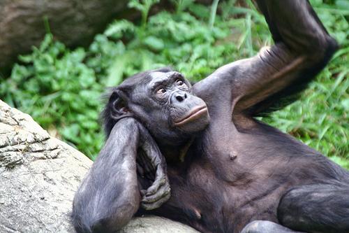30 Strangest Animal Mating Habits - Neatorama