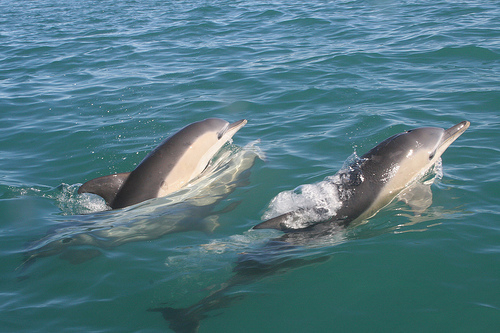 The third dolphin ogoplex and sexual