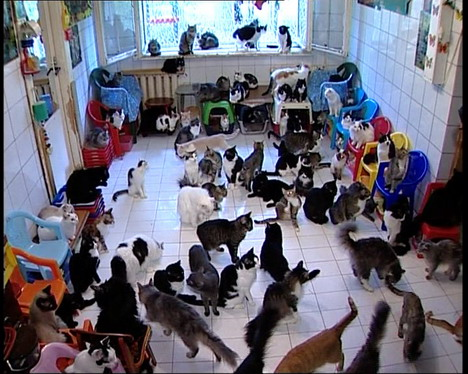 woman with 100 cats
