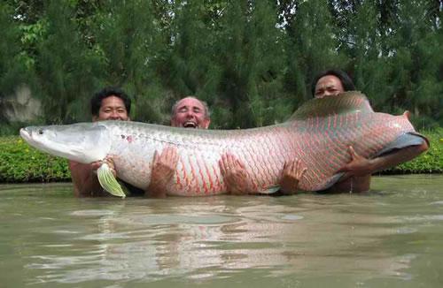 caption monkey 10 giant fish   neatorama