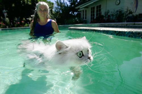 Caption Monkey 8 Swimming Cat Neatorama