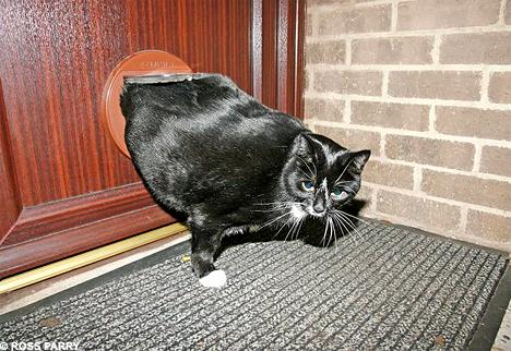 & Fat Cat Got Stuck in Kitty Door! - Neatorama pezcame.com