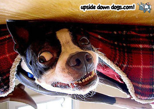 [Image: upside-down-dog.jpg]