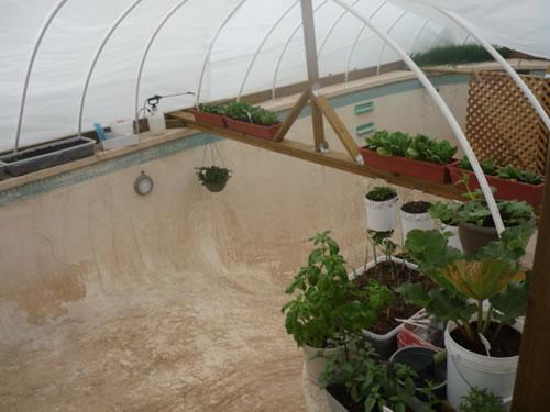 Turning An Empty Backyard Pool Into An Urban Greenhouse