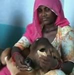 Breastfeeding a Calf