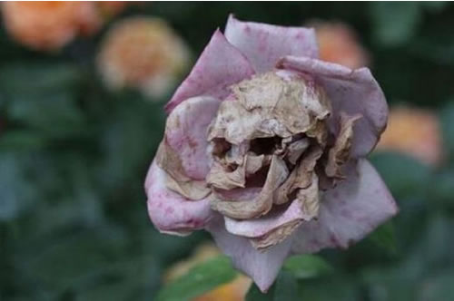 http://static.neatorama.com/images/2011-02/skull-flower.jpg
