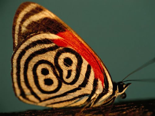 http://static.neatorama.com/images/2011-03/neglected-88-butterfly.jpg
