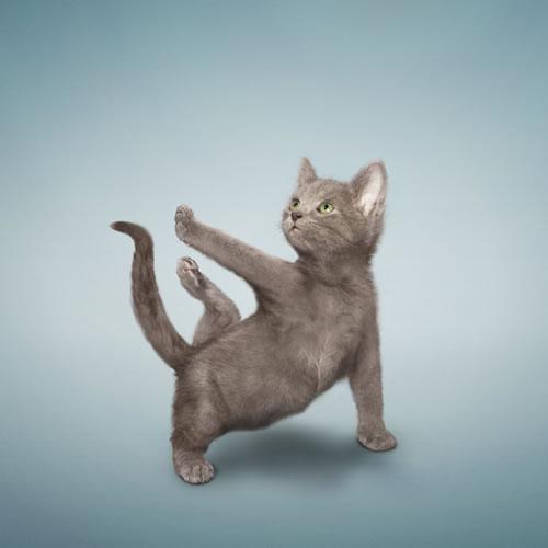 Yoga Cats - Neatorama