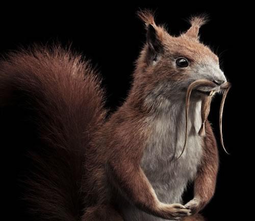 extreme animals squirrel grooming neatorama santoso alex saturday december pm