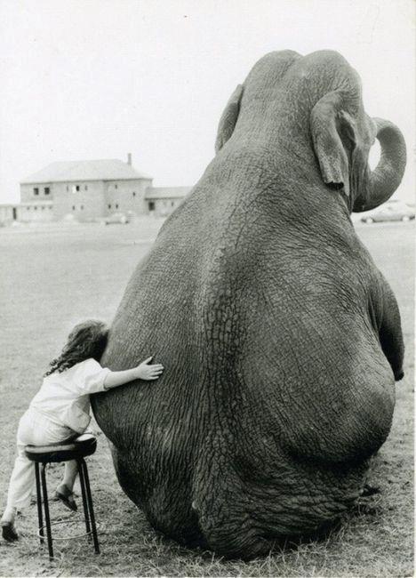 Elephant Got A Hug Neatorama