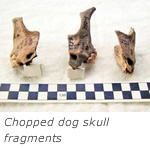 Chopped dog skull fragments suggest ritual sacrifice in ancient Russia