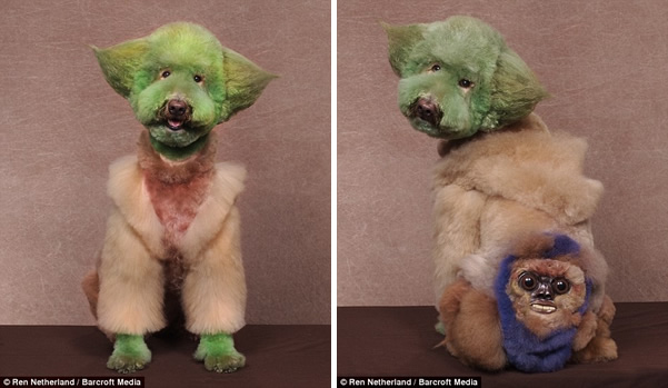 Bilderesultat for dogs that look like other animals