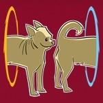 Portal Dog