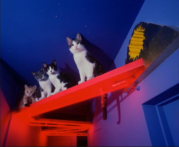 The cat house 2
