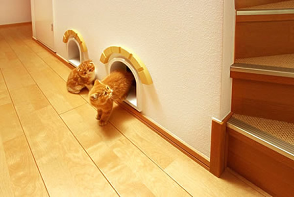 Cat Room Design Ideas 17 best ideas about cat room on pinterest cat stuff cat hacks and cat beds Extra Cat Room Hidden Under The Stairs Decorations Cute Kid Pet Friendly Decor