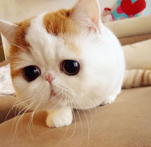 Snoopybabe, the Cutest Sad Cat Ever! - Neatorama