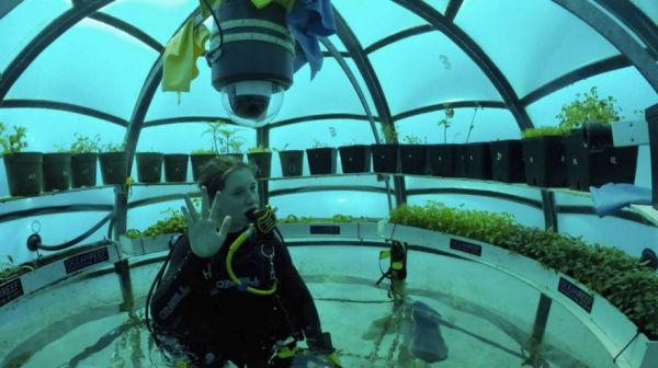 While Scuba Diving Off The Coast Of Italy, Sergio Gamberini Had An Idea  About How He Could Provide All Four: He Could Build Greenhouses Underwater.