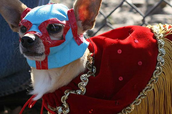 & Over 40 Fantastic Animal Halloween Costumes - Neatorama