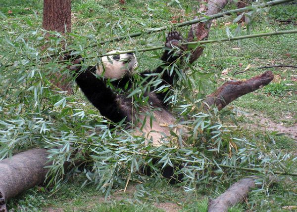 Four of the World's Dumbest Animals - Neatorama