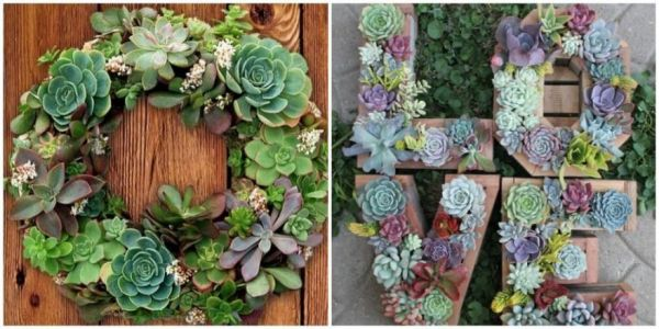 New And Creative Ways To Show Off Your Succulents