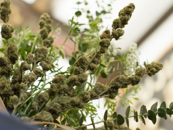 You Can Send Your Sweetie a Marijuana Bouquet This Valentine's Day