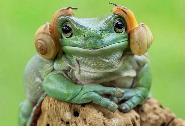 When A Frog Looks Like A Frog Few People Care Or Take Notice, But When A  Frog Looks Like Princess Leia Because It Has Two Snails Crawling On Its  Head People ...