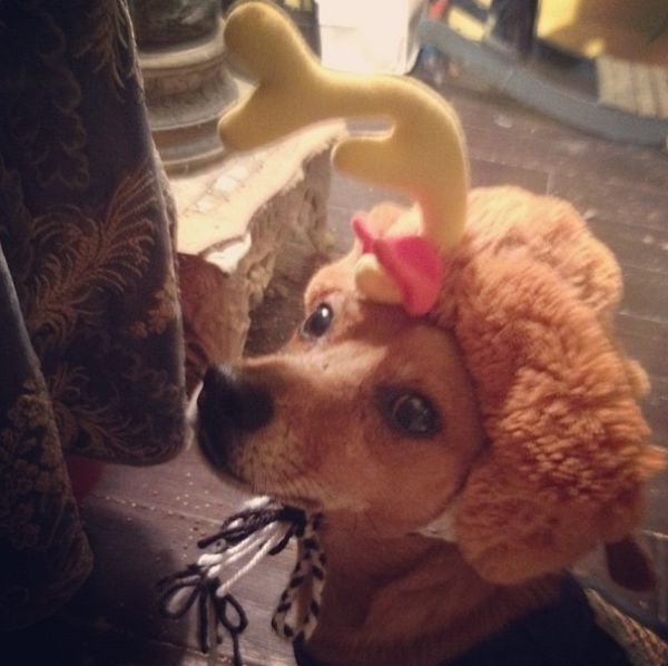 C Merry has a dog named Oscar Madison. Oscar was rescued from the streets and his back legs donu0027t work so he gets around on a set of wheels. & Oscar and Tiki Dress for Halloween - Neatorama