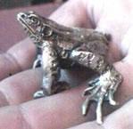 skip-bertrand-frog.jpg