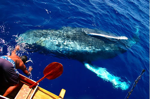Whale Close Encounter