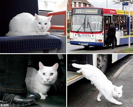 450_travelingcat.jpg