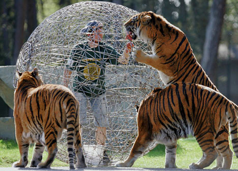 Crazy tiger stunt
