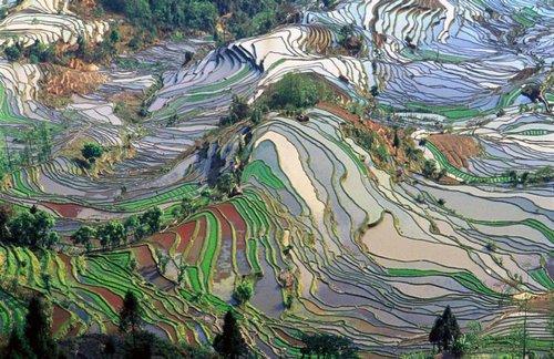 500_yunnan_china.jpg