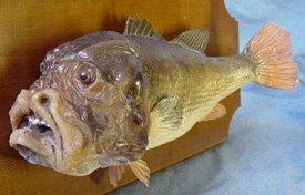 fiendishmanfish.jpg