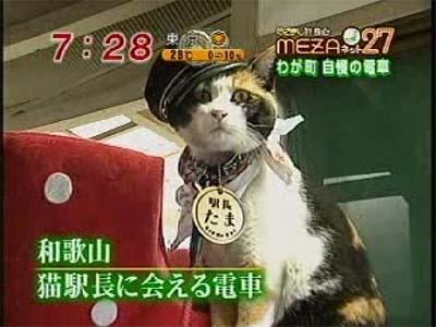 station-master-cat.JPG
