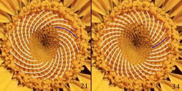 sunflowermath.jpg
