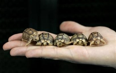 Turtle and Tortoise Pictures. - Neatorama