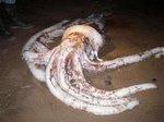 150_squid.jpg