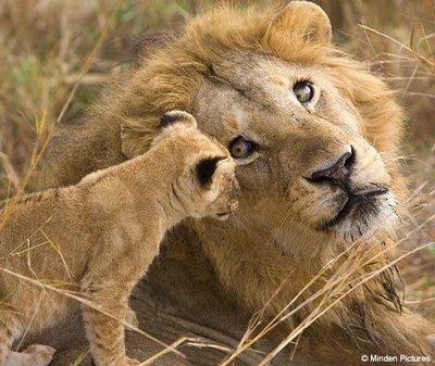 400_lionkingand-son.jpg