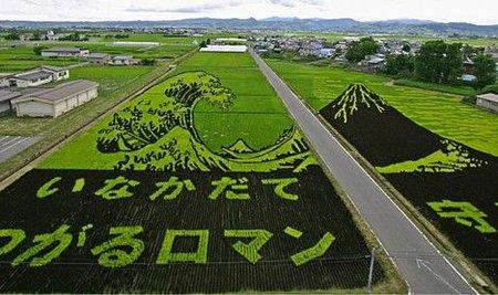 450_rice_art1.jpg