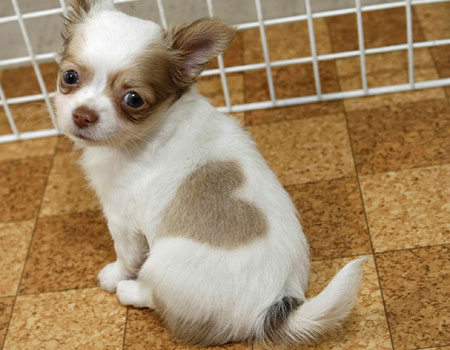 puppyheart.jpg