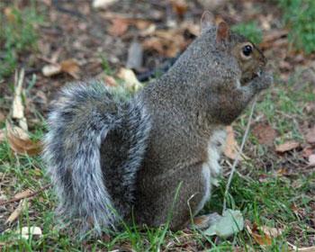 eating-squirrel_1.jpg