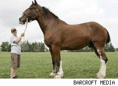 clydesdale240x160