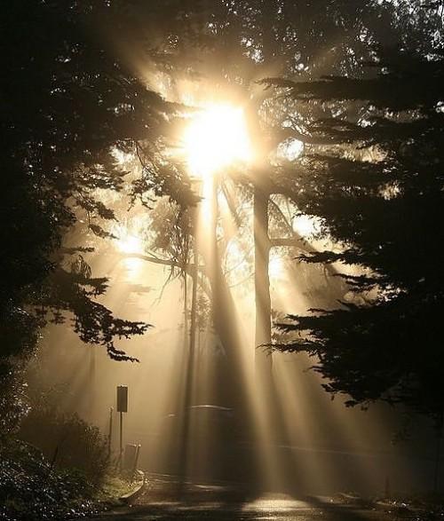Beautiful Rays Of Light Neatorama