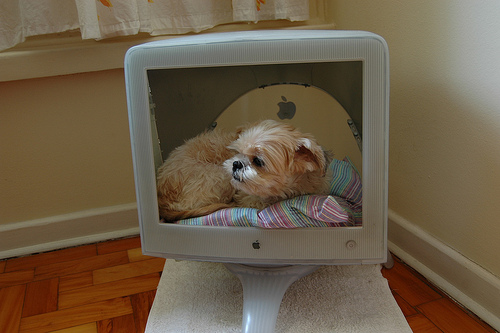 Old Computer Monitor Turned Into Dog Bed Neatorama