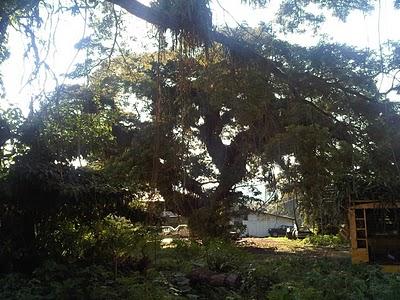 swiss family robinson tree neatorama