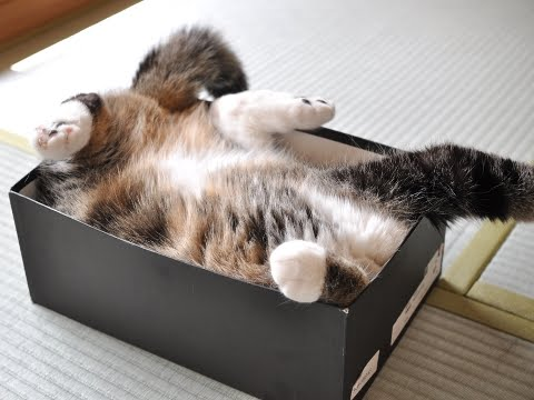 The Best Maru Moments Of 2010 Neatorama