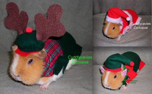 Clothes For Guinea Pigs To Wear Uk