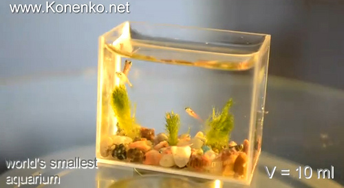 The World S Smallest Aquarium Neatorama